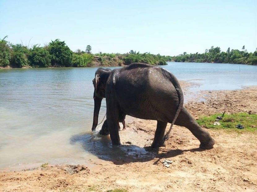 Cuidado de animales en Tailandia