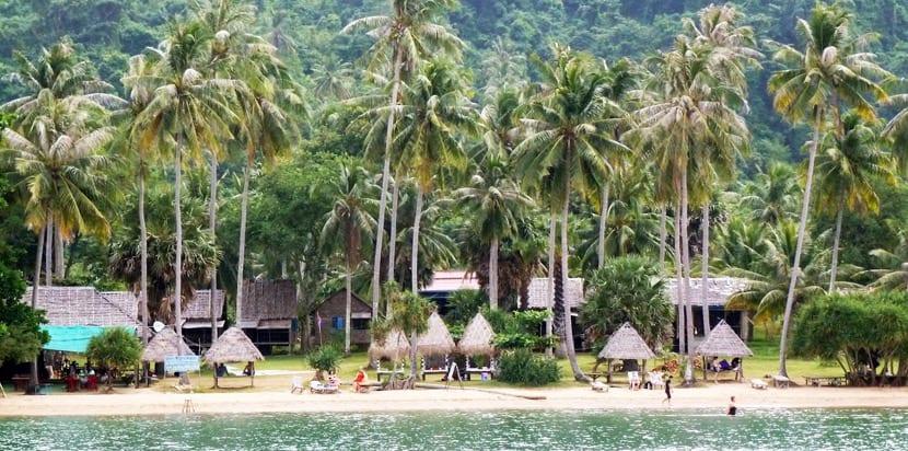 Palmeras de Koh Tonsay