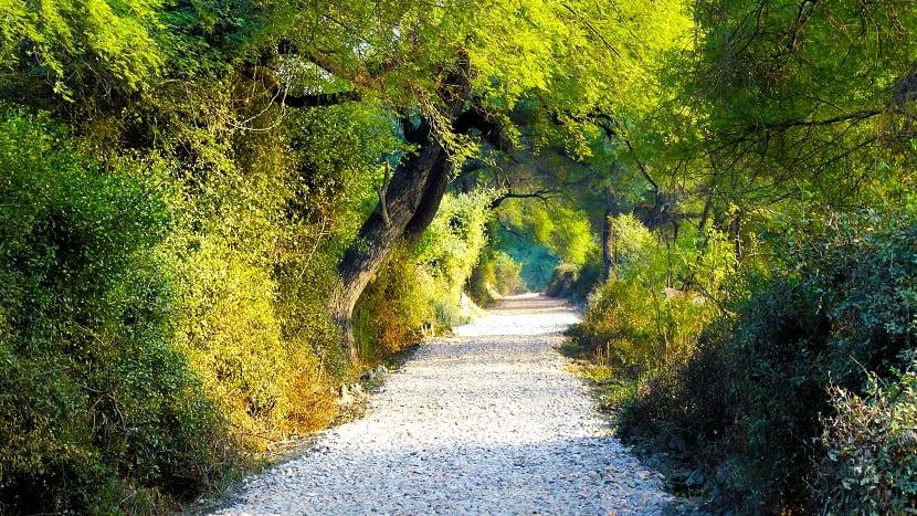 Parque de Rajasthan en la India