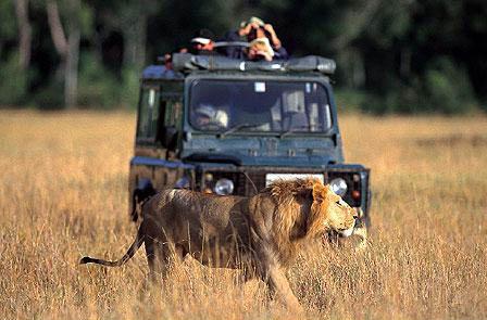 nairobi safari51 Nairobi, capital del safari del mundo