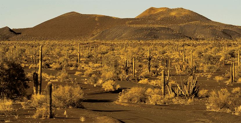 desierto-norteamerica