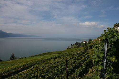 lagos-suizas3