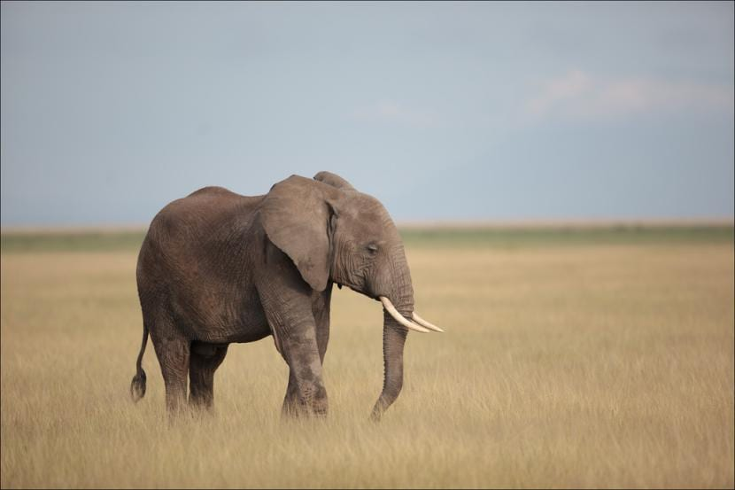 Elefante en el valle del Rift
