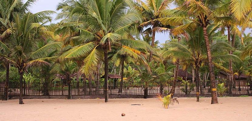 Playa marari con sus palmeras