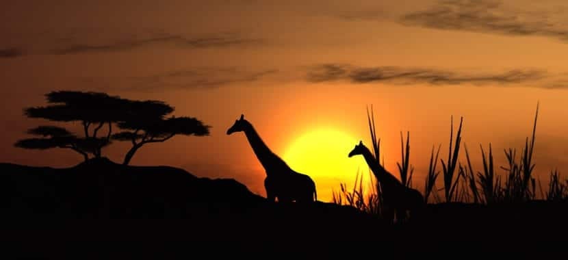 Turismo Cinegetico en africa