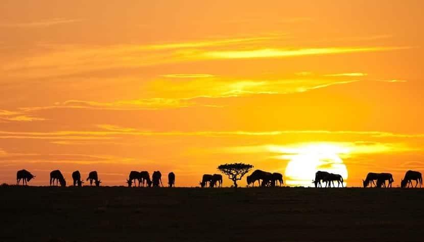 Anochecer en Tanzania