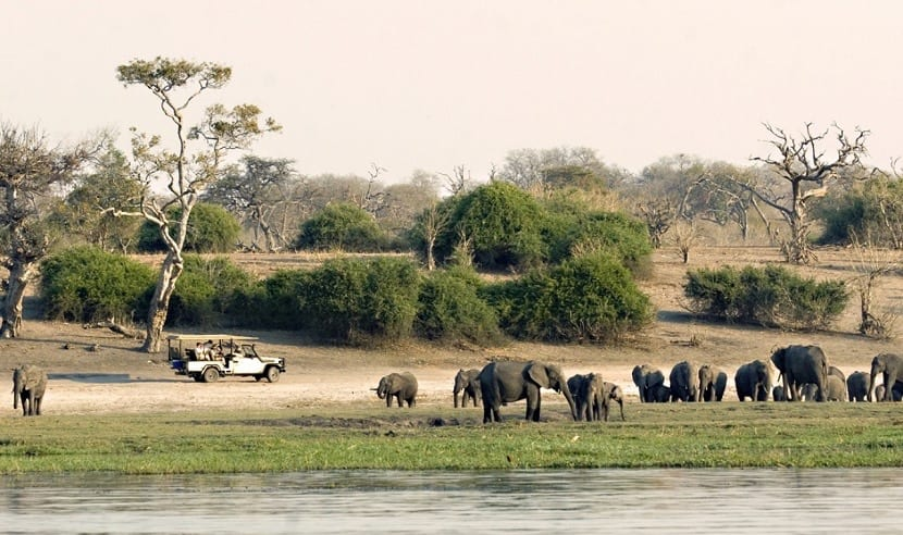 Fauna en Zimbabue para disfrutar del turismo en África