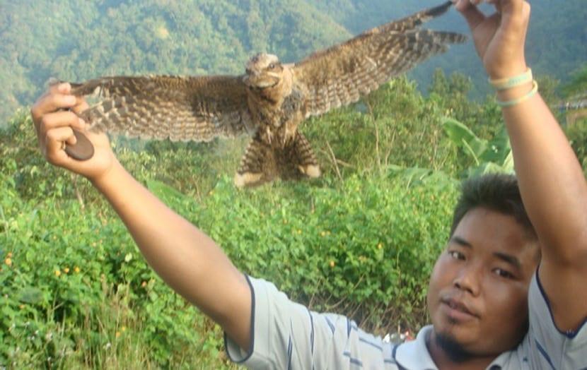 Pájaro que se suicida en Jatinga