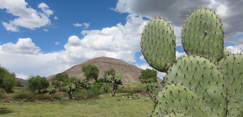 Cactus en Teotihuacan
