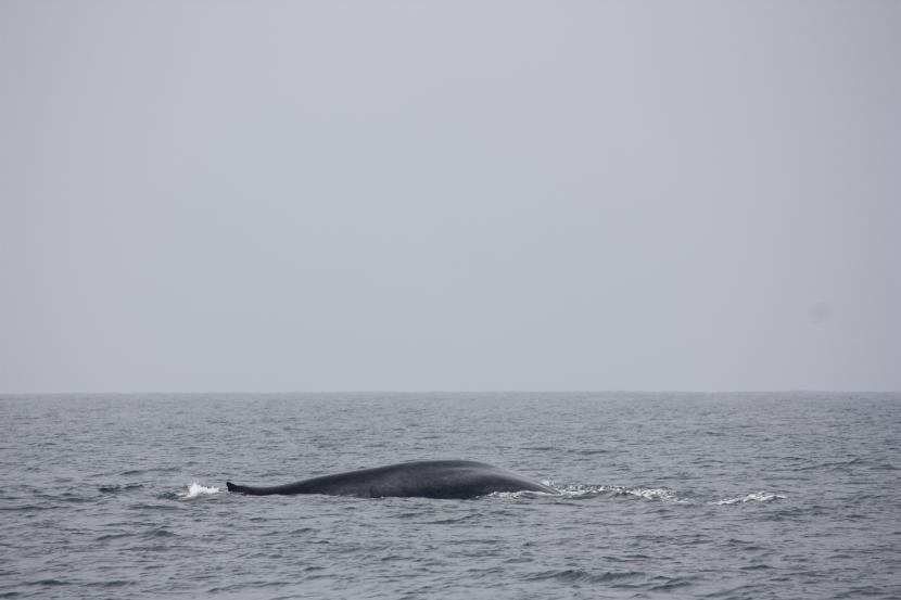 Ballenas en Mirissa