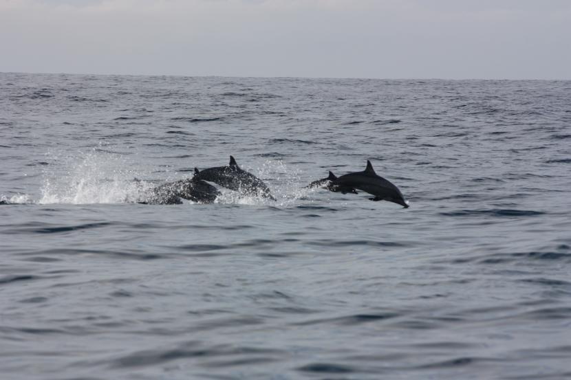 Grupo de delfines en Mirissa