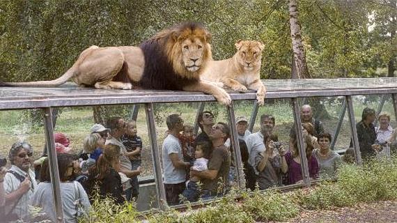 Zoo Thoiry París Francia