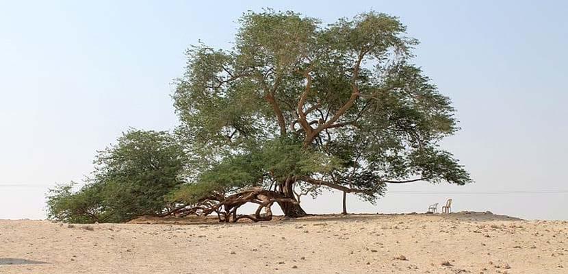 Árbol de la vida en Riffa
