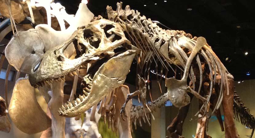 Museo de Historia Natural en Dallas