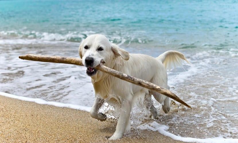Playas Que Admiten Perros En Cantabria Actualidad Viajes