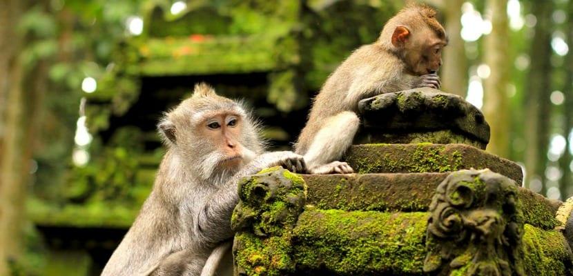 bosque monos ubud