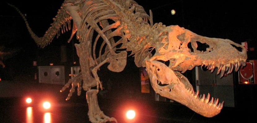 Esqueleto dinopolis Trex