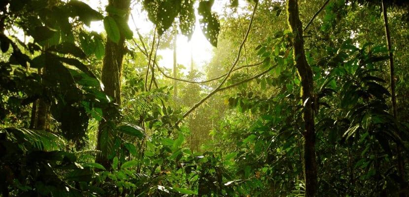 Jungla de Borneo