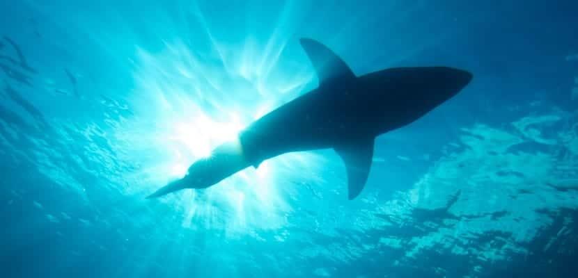 tiburones guadalupe