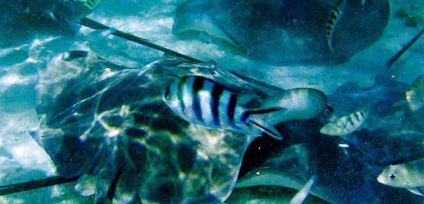 Vida marina en Bora Bora
