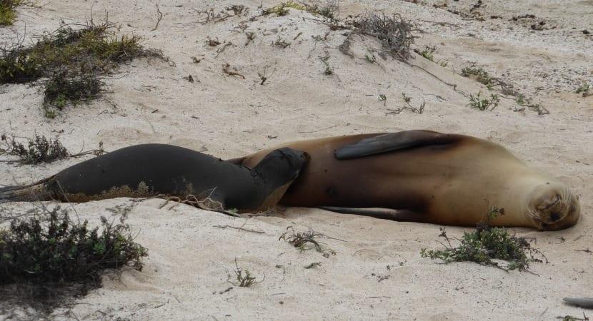 El León Dormido playa