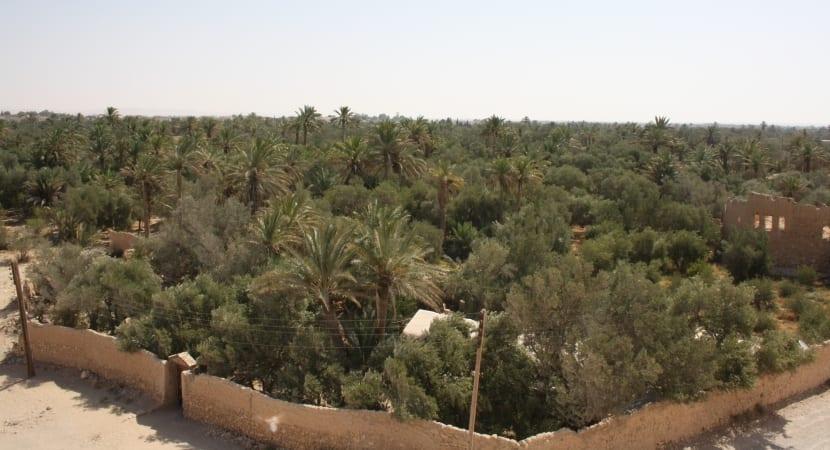 Palmyra Siria oasis