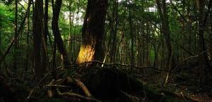 Bosques de los suicidios