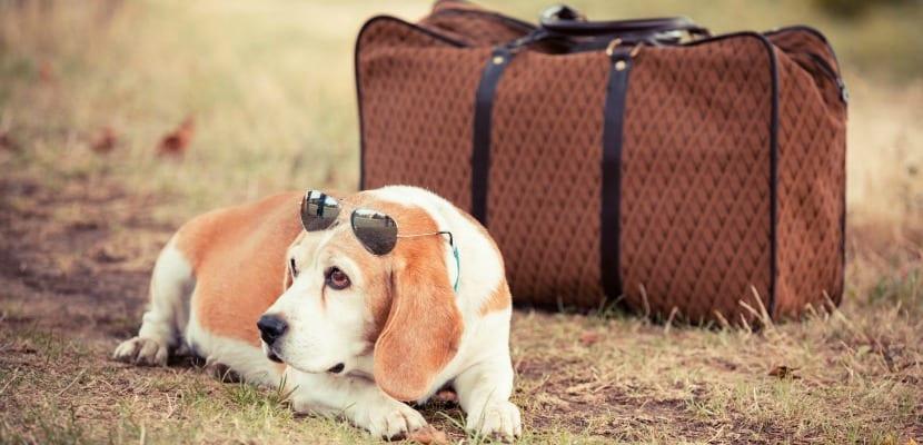 mascotas maleta