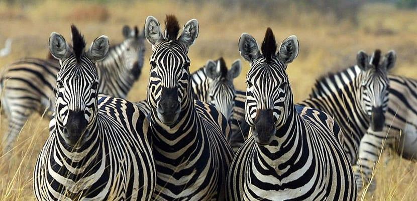 Viajar en 2016 a los parques de Botswana