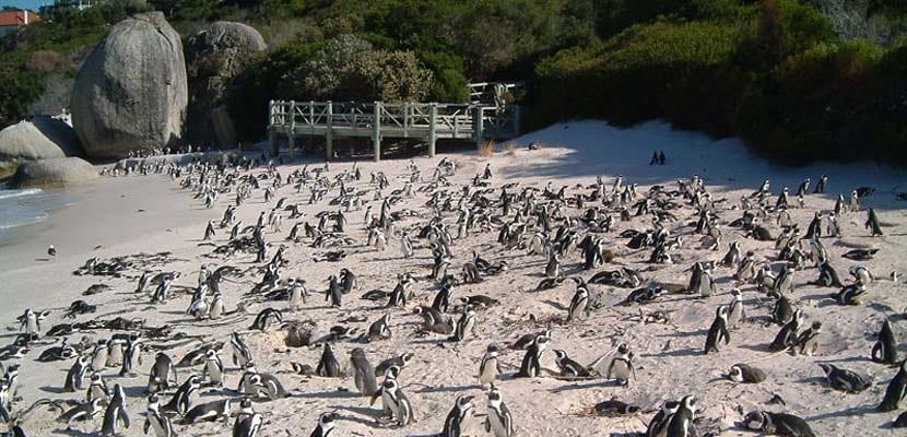 Boulders Beach en Sudáfrica