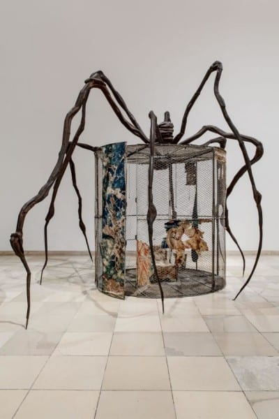 Celda araña