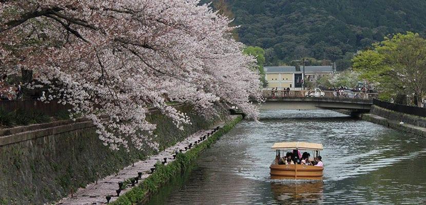 Cerezos en Kioto 1