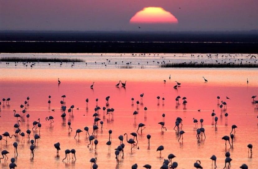 Escapada al Parque Nacional y Natural de Doñana 2