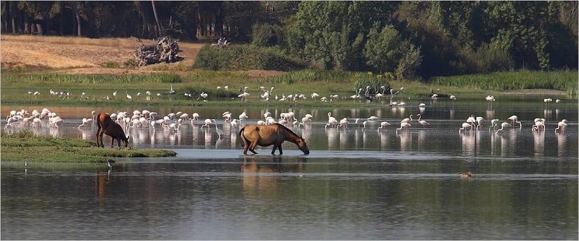 Escapada al Parque Nacional y Natural de Doñana