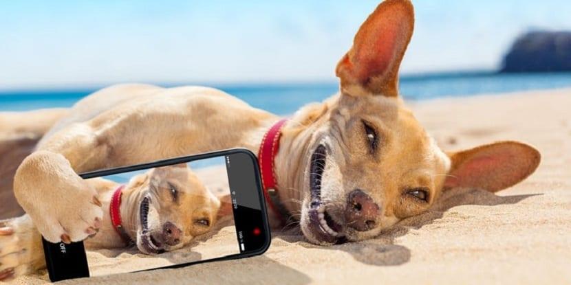 Lleva a tu perro a la playa .