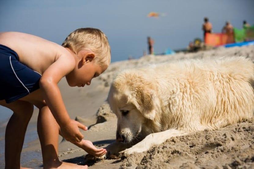 Lleva a tu perro a la playa