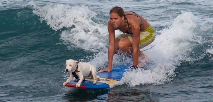 playas para perros 2