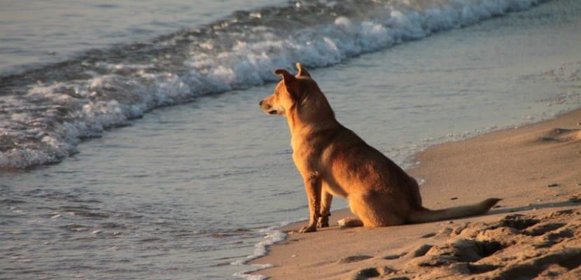 playas para perros 3 (1)