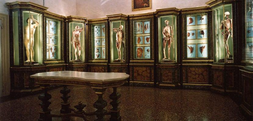 Museo Anatómico