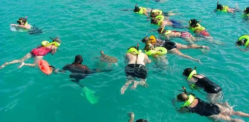 Tortugas marinas en Barbados