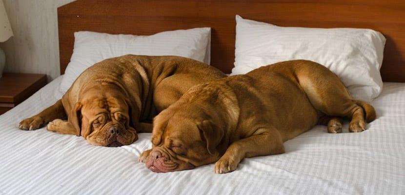 viajar-con-perros-alojamiento