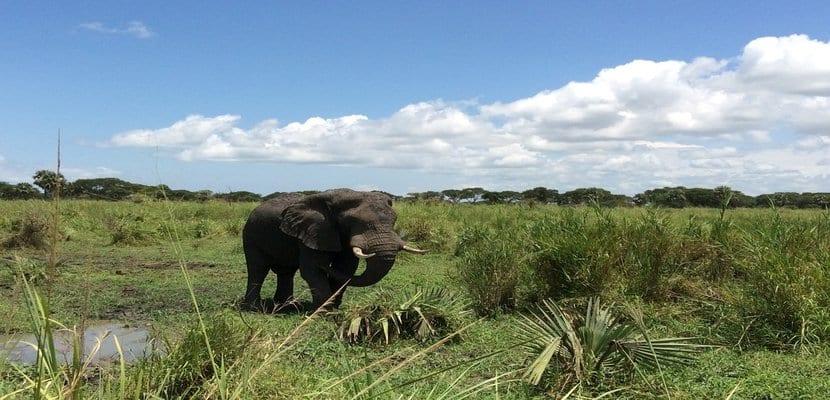 rsz_elephant-733254_1280