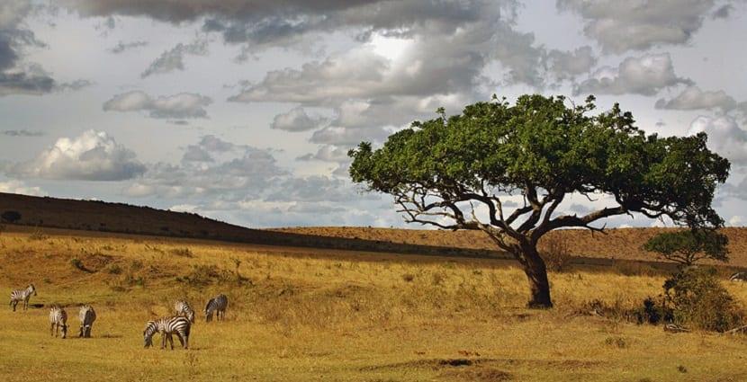 africa-la-estepa
