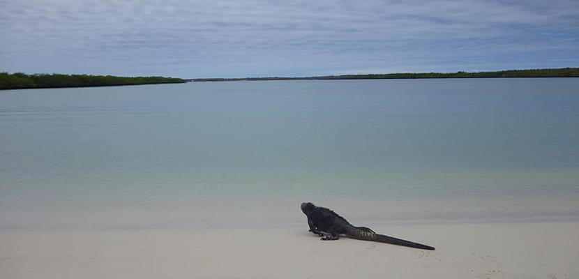 Galápagos Beach
