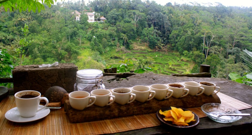 Plantación de café en Bali