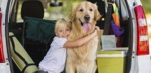 Viaje con el perro