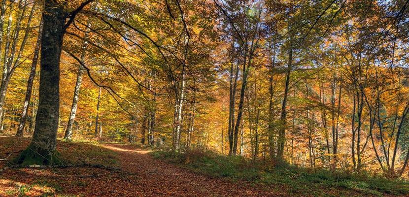 Destinos de otoño