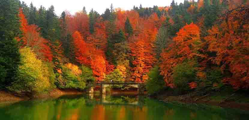 La Selva de Irati, el hayedo europeo más extenso tras la Selva Negra