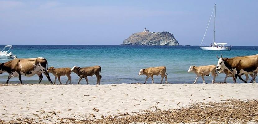 Playa Barcaggio
