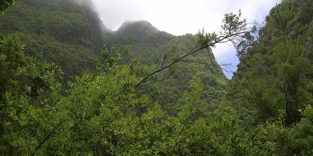 Bosque Los Tilos
